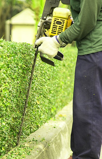 gardener trimming branches